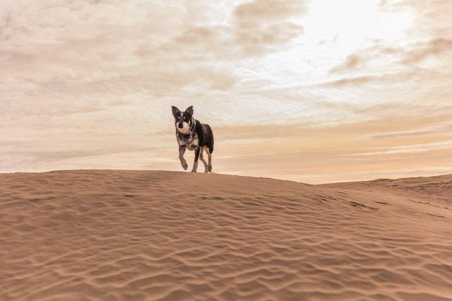 40-dogwalktrail-hond-sahara