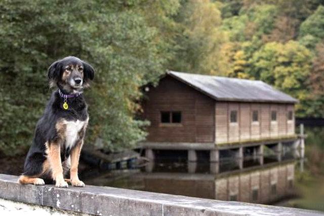 Belgie_2_2-dogwalktrail-belgie-Hond-stuwmeer-nisramont