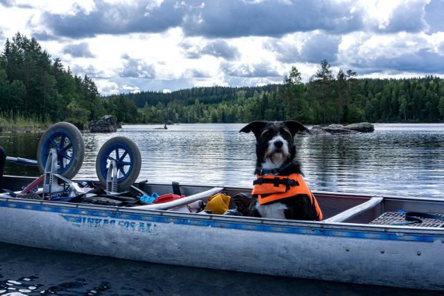 Specials_14-dogwalktrail-zweden-kano-hond-trekking