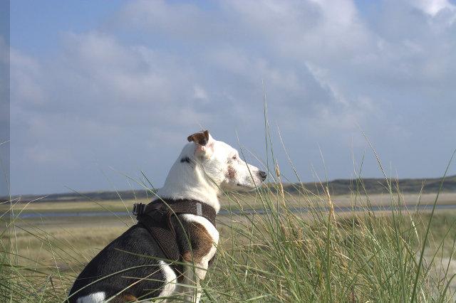 Sub_1_24-dogwalktrail-nederland-jack-russell